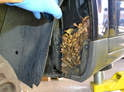 Front- Carefully pull the liner back and inspect for dirt, debris and critters.